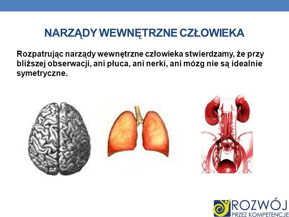 NARZĄDY WEWNĘTRZNE CZŁOWIEKA Rozpatrując narządy wewnętrzne człowieka stwierdzamy, że przy bliższej obserwacji, ani płuca, ani nerki, ani mózg nie są