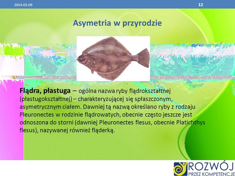 2014-01-09 12 Asymetria w przyrodzie Flądra, płastuga – ogólna nazwa ryby flądrokształtnej (płastugokształtnej) – charakteryzującej się spłaszczonym,