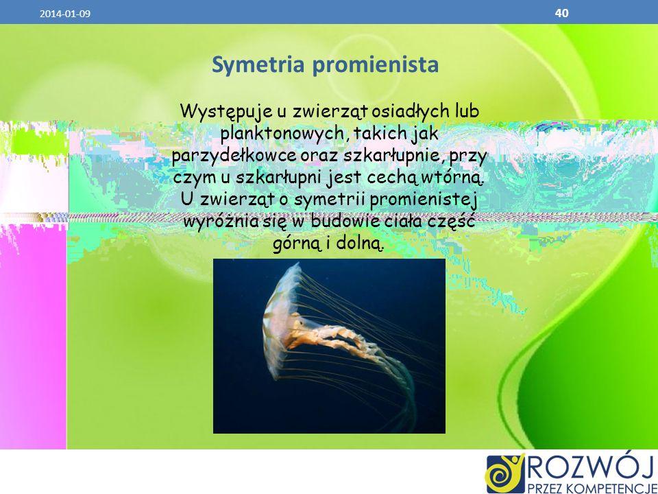 2014-01-09 40 Symetria promienista Występuje u zwierząt osiadłych lub planktonowych, takich jak parzydełkowce oraz szkarłupnie, przy czym u szkarłupni