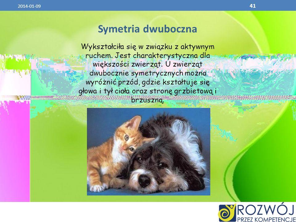 2014-01-09 41 Symetria dwuboczna Wykształciła się w związku z aktywnym ruchem. Jest charakterystyczna dla większości zwierząt. U zwierząt dwubocznie s