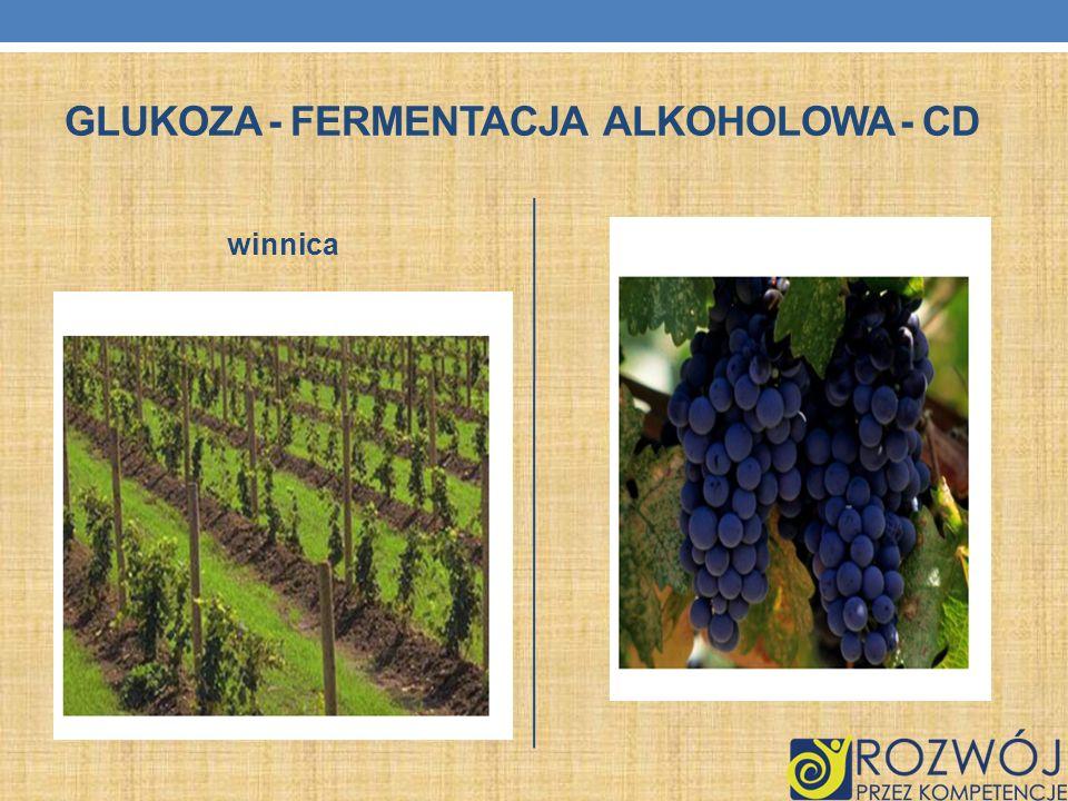 GLUKOZA - FERMENTACJA ALKOHOLOWA - CD winnica