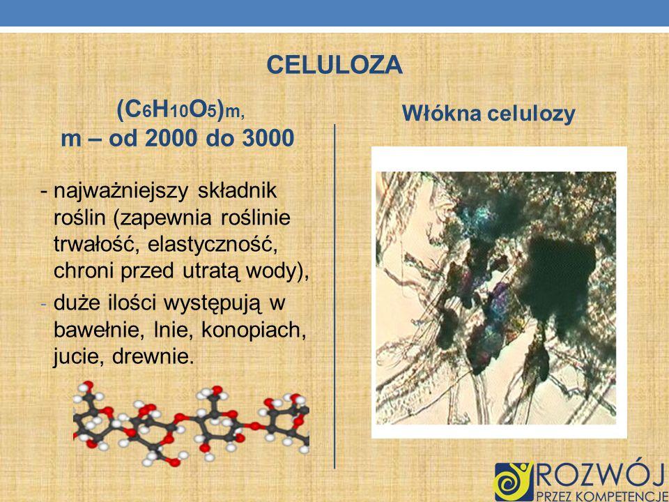 CELULOZA (C 6 H 10 O 5 ) m, m – od 2000 do 3000 - najważniejszy składnik roślin (zapewnia roślinie trwałość, elastyczność, chroni przed utratą wody),