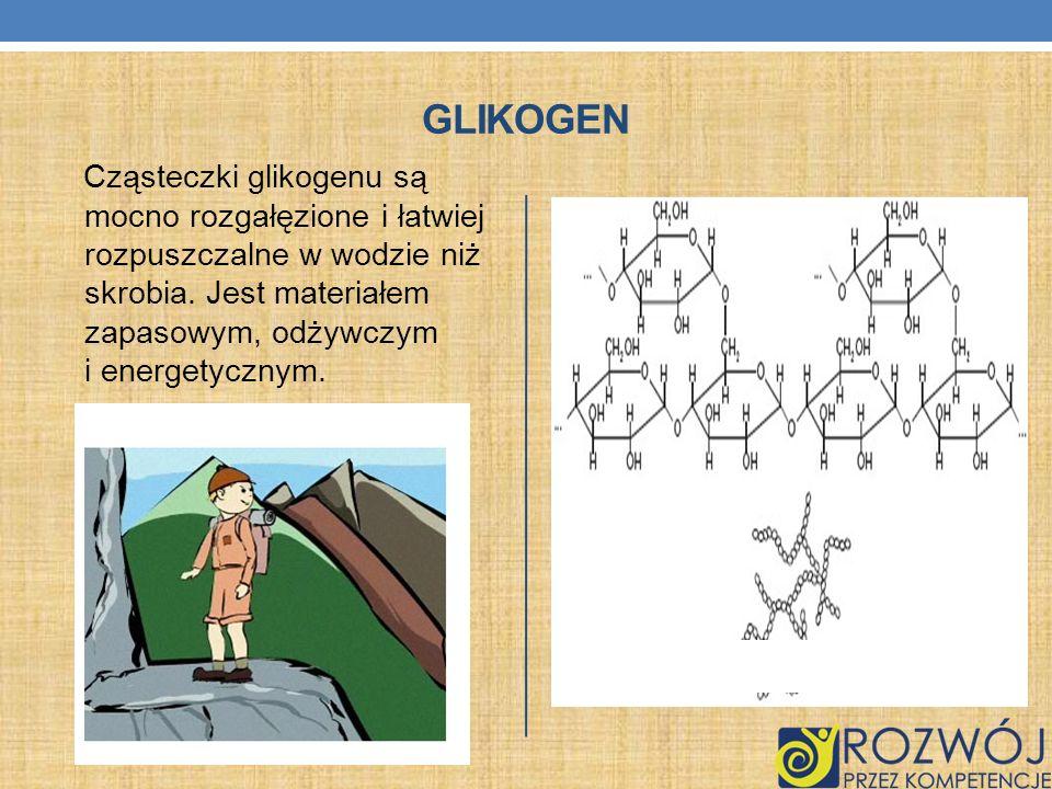 GLIKOGEN Cząsteczki glikogenu są mocno rozgałęzione i łatwiej rozpuszczalne w wodzie niż skrobia. Jest materiałem zapasowym, odżywczym i energetycznym
