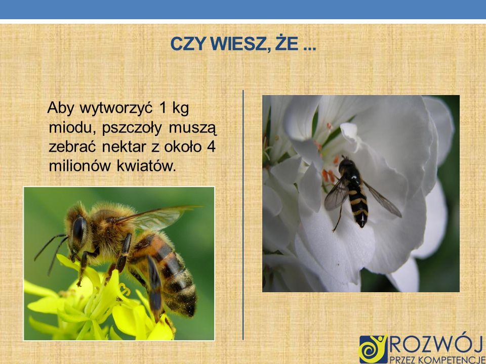 CZY WIESZ, ŻE... Aby wytworzyć 1 kg miodu, pszczoły muszą zebrać nektar z około 4 milionów kwiatów.