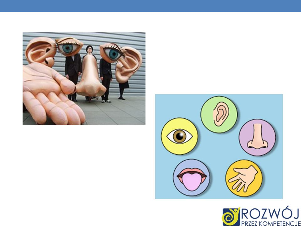 Dlaczego: Końcówki palców mają więcej zakończeń nerwowych, dlatego lepiej odczuwają nawet najmniejszy dotyk.
