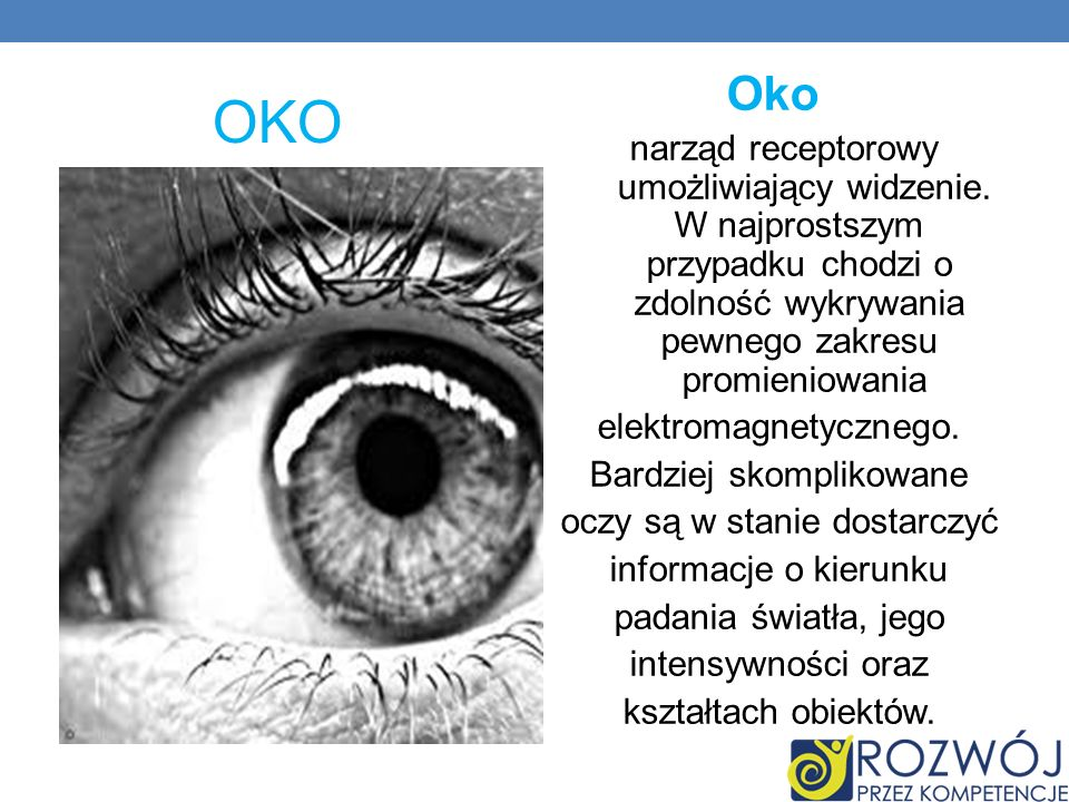 OKO Oko narząd receptorowy umożliwiający widzenie. W najprostszym przypadku chodzi o zdolność wykrywania pewnego zakresu promieniowania elektromagnety