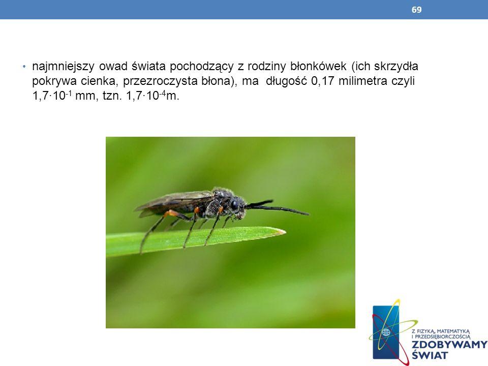 69 najmniejszy owad świata pochodzący z rodziny błonkówek (ich skrzydła pokrywa cienka, przezroczysta błona), ma długość 0,17 milimetra czyli 1,710 -1
