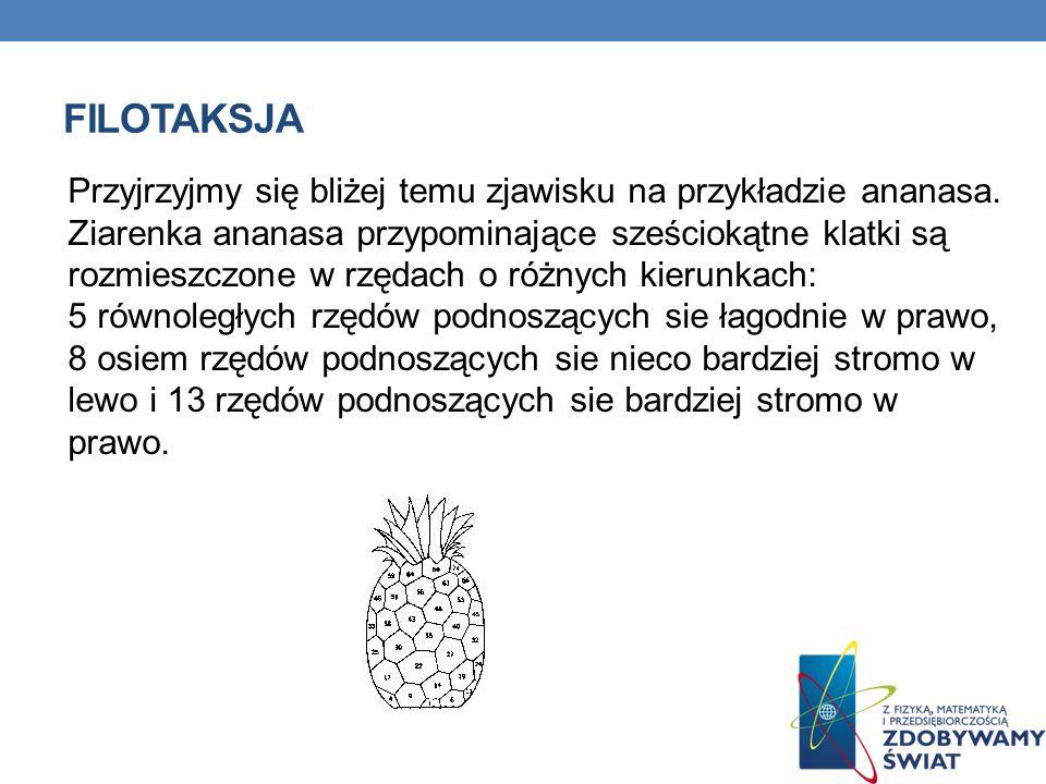 Przyjrzyjmy się bliżej temu zjawisku na przykładzie ananasa. Ziarenka ananasa przypominające sześciokątne klatki są rozmieszczone w rzędach o różnych