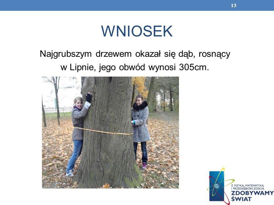 WNIOSEK Najgrubszym drzewem okazał się dąb, rosnący w Lipnie, jego obwód wynosi 305cm. 13