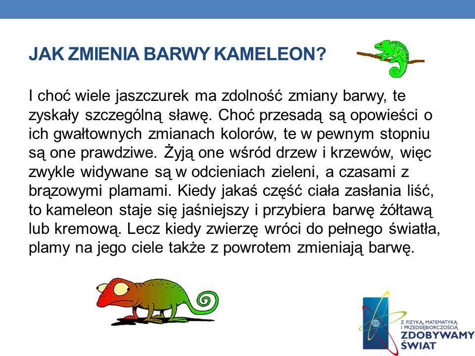 JAK ZMIENIA BARWY KAMELEON? I choć wiele jaszczurek ma zdolność zmiany barwy, te zyskały szczególną sławę. Choć przesadą są opowieści o ich gwałtownyc