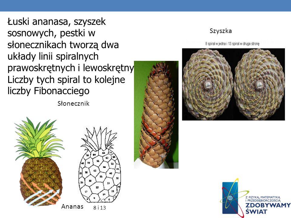 Łuski ananasa, szyszek sosnowych, pestki w słonecznikach tworzą dwa układy linii spiralnych prawoskrętnych i lewoskrętnych. Liczby tych spiral to kole