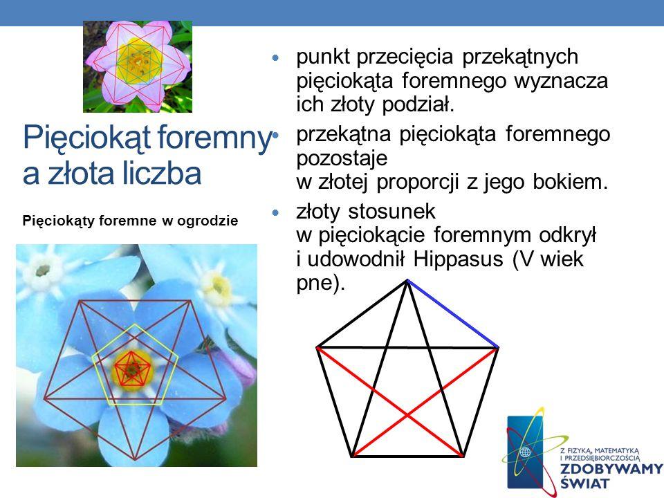 Pięciokąty foremne w ogrodzie Pięciokąt foremny a złota liczba punkt przecięcia przekątnych pięciokąta foremnego wyznacza ich złoty podział. przekątna