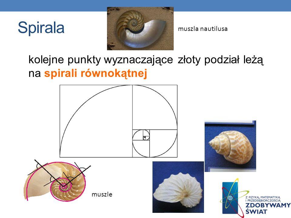 Spirala kolejne punkty wyznaczające złoty podział leżą na spirali równokątnej muszle muszla nautilusa