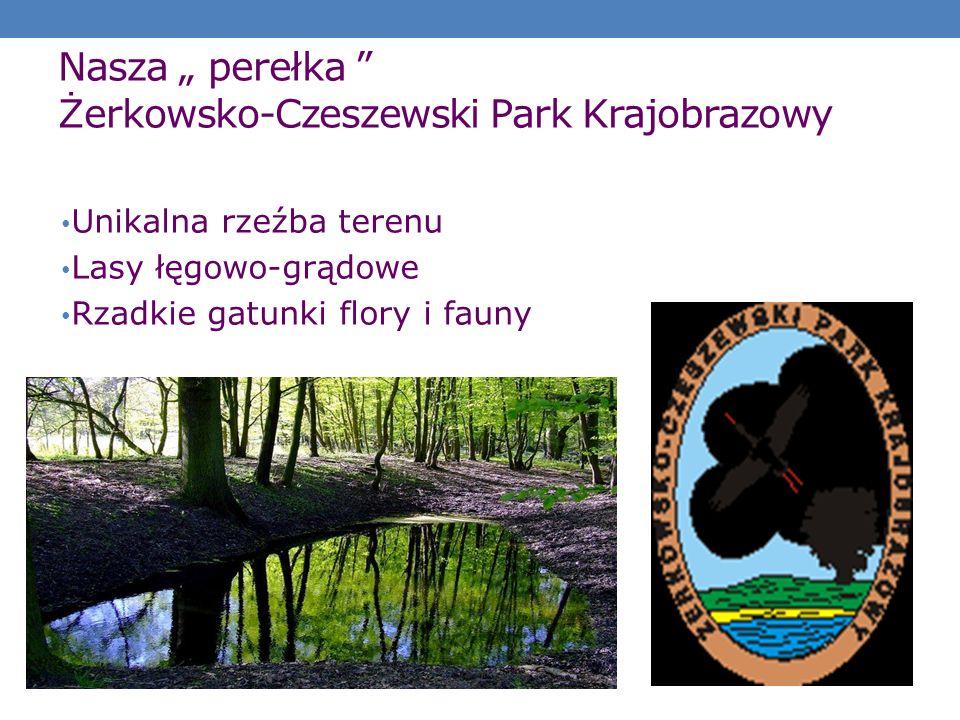 Nasza perełka Żerkowsko-Czeszewski Park Krajobrazowy Unikalna rzeźba terenu Lasy łęgowo-grądowe Rzadkie gatunki flory i fauny