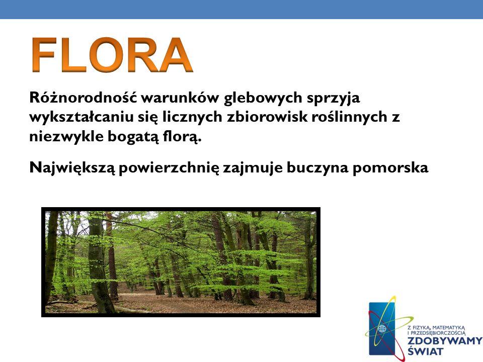 Różnorodność warunków glebowych sprzyja wykształcaniu się licznych zbiorowisk roślinnych z niezwykle bogatą florą. Największą powierzchnię zajmuje buc