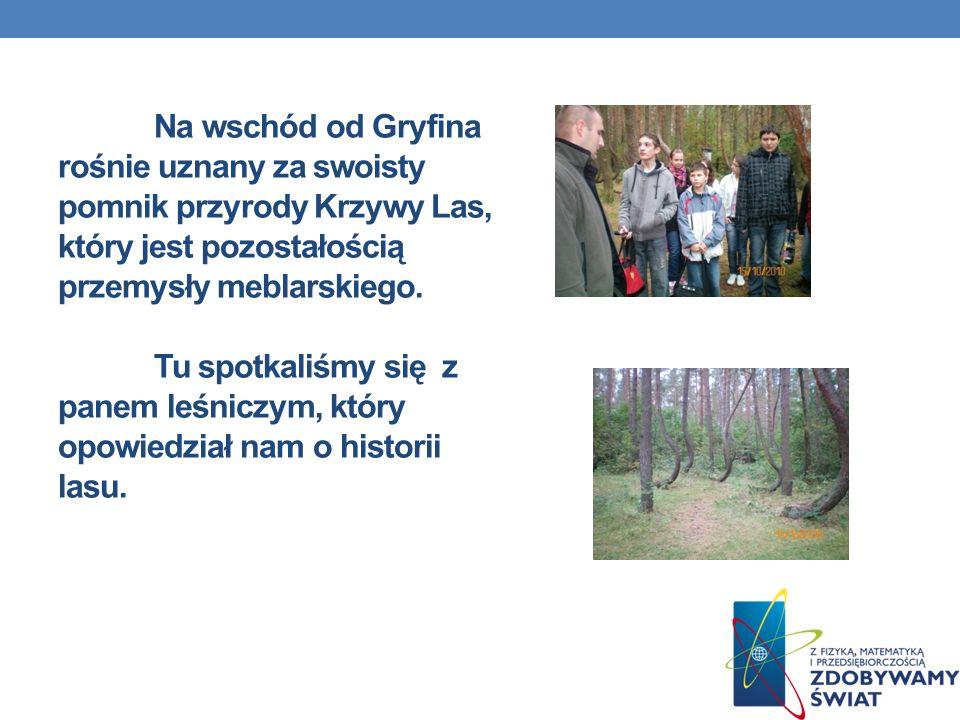 Na wschód od Gryfina rośnie uznany za swoisty pomnik przyrody Krzywy Las, który jest pozostałością przemysły meblarskiego. Tu spotkaliśmy się z panem