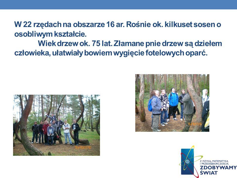 . W 22 rzędach na obszarze 16 ar. Rośnie ok. kilkuset sosen o osobliwym kształcie. Wiek drzew ok. 75 lat. Złamane pnie drzew są dziełem człowieka, uła