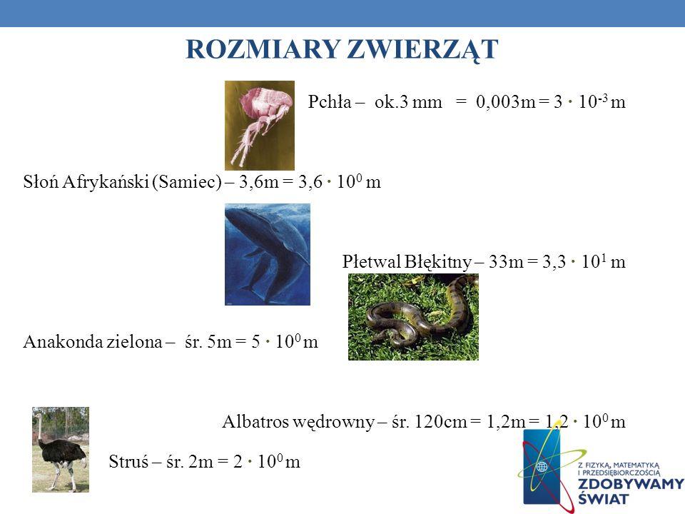 ROZMIARY ZWIERZĄT Pchła – ok.3 mm = 0,003m = 3 10 -3 m Słoń Afrykański (Samiec) – 3,6m = 3,6 10 0 m Płetwal Błękitny – 33m = 3,3 10 1 m Anakonda zielo