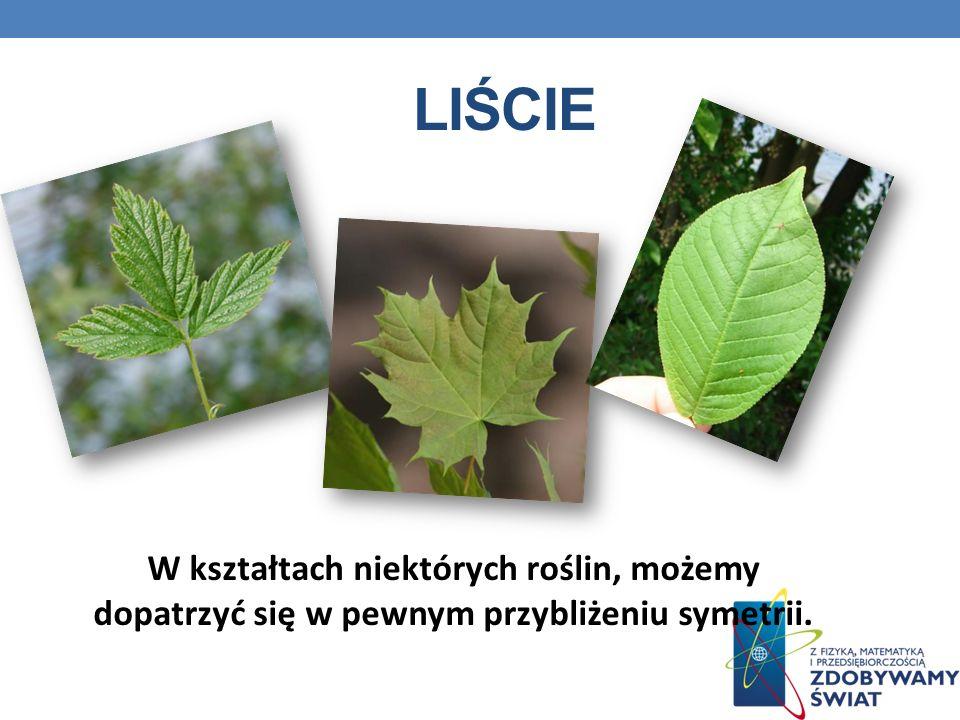 LIŚCIE W kształtach niektórych roślin, możemy dopatrzyć się w pewnym przybliżeniu symetrii.