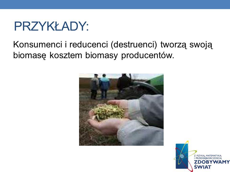 PRZYKŁADY: Konsumenci i reducenci (destruenci) tworzą swoją biomasę kosztem biomasy producentów.