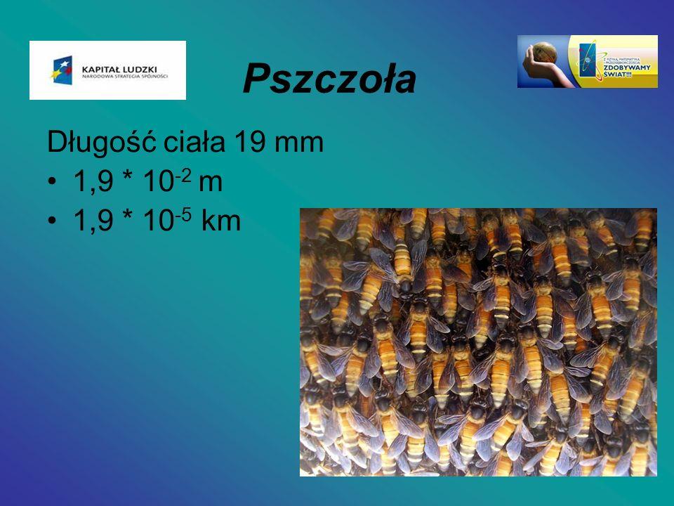 Pszczoła Długość ciała 19 mm 1,9 * 10 -2 m 1,9 * 10 -5 km