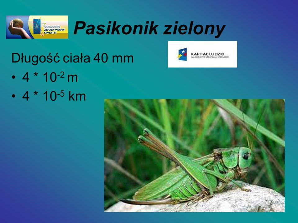 Pasikonik zielony Długość ciała 40 mm 4 * 10 -2 m 4 * 10 -5 km