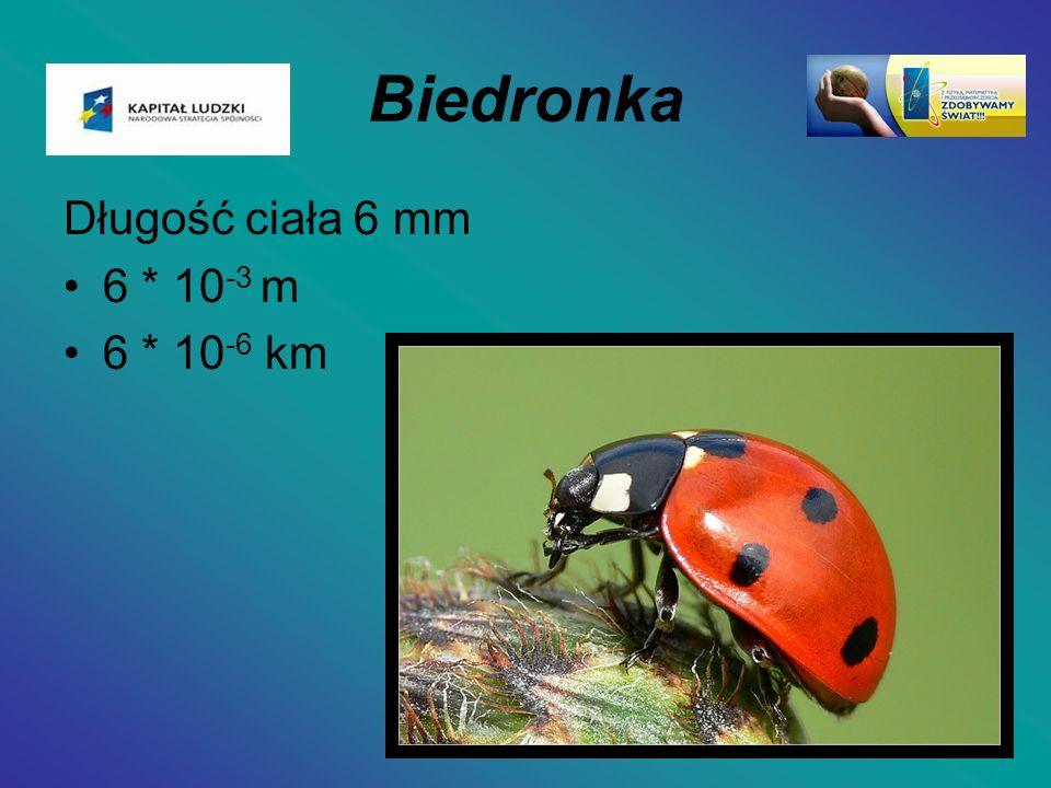 Biedronka Długość ciała 6 mm 6 * 10 -3 m 6 * 10 -6 km