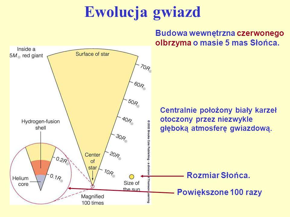 Ewolucja gwiazd Budowa wewnętrzna czerwonego olbrzyma o masie 5 mas Słońca. Rozmiar Słońca. Powiększone 100 razy Centralnie położony biały karzeł otoc