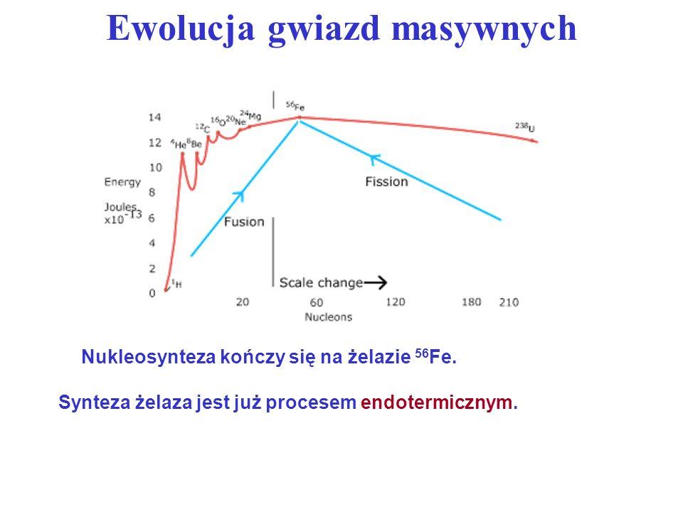 Ewolucja gwiazd masywnych Nukleosynteza kończy się na żelazie 56 Fe. Synteza żelaza jest już procesem endotermicznym.