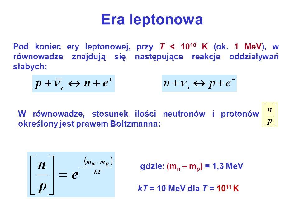 Era leptonowa Pod koniec ery leptonowej, przy T < 10 10 K (ok. 1 MeV), w równowadze znajdują się następujące reakcje oddziaływań słabych: gdzie: (m n