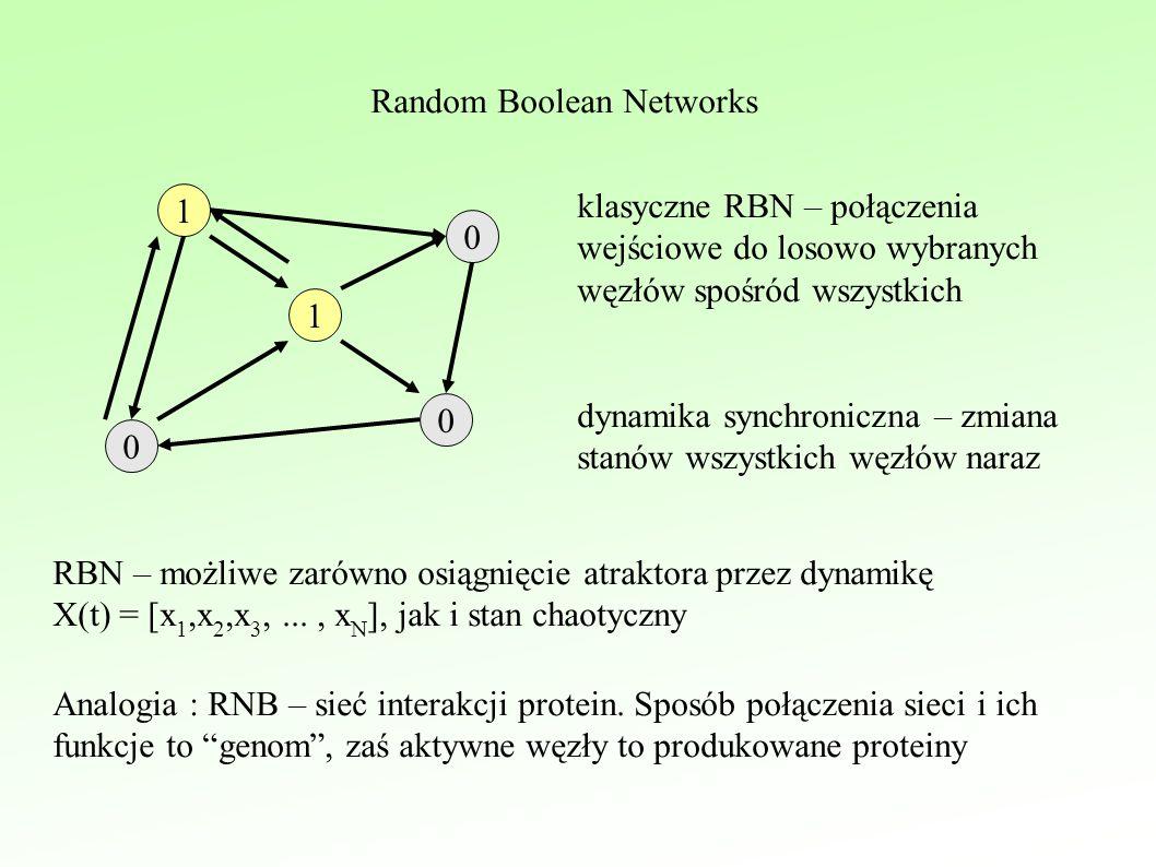 Random Boolean Networks 1 0 0 0 1 klasyczne RBN – połączenia wejściowe do losowo wybranych węzłów spośród wszystkich dynamika synchroniczna – zmiana stanów wszystkich węzłów naraz RBN – możliwe zarówno osiągnięcie atraktora przez dynamikę X(t) = [x 1,x 2,x 3,..., x N ], jak i stan chaotyczny Analogia : RNB – sieć interakcji protein.