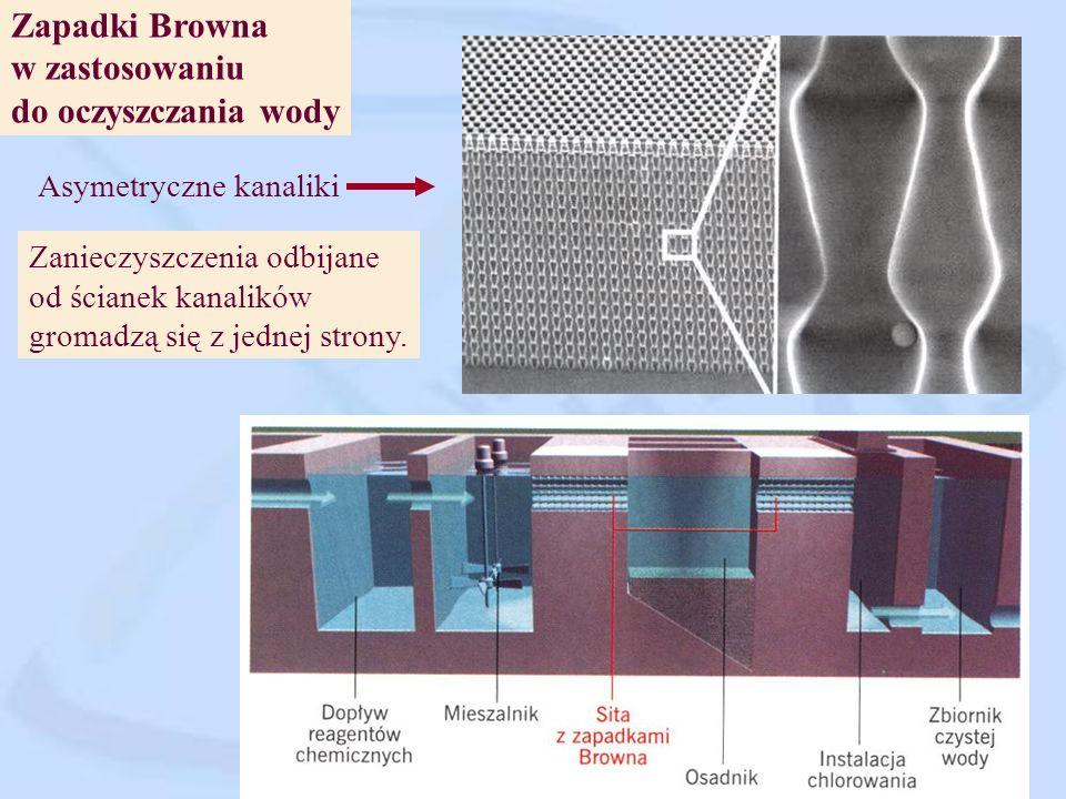 Ruchy... zapadki Browna Zasada: asymetryczne przeszkody nadają bezładnym ruchom określony kierunek. Sortowanie wirusów Ciecz przepływa przez kanał z z