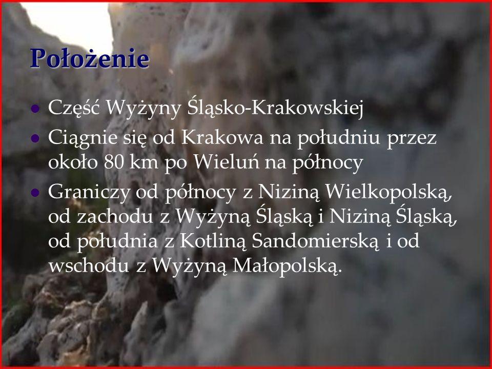 Położenie Część Wyżyny Śląsko-Krakowskiej Ciągnie się od Krakowa na południu przez około 80 km po Wieluń na północy Graniczy od północy z Niziną Wielk