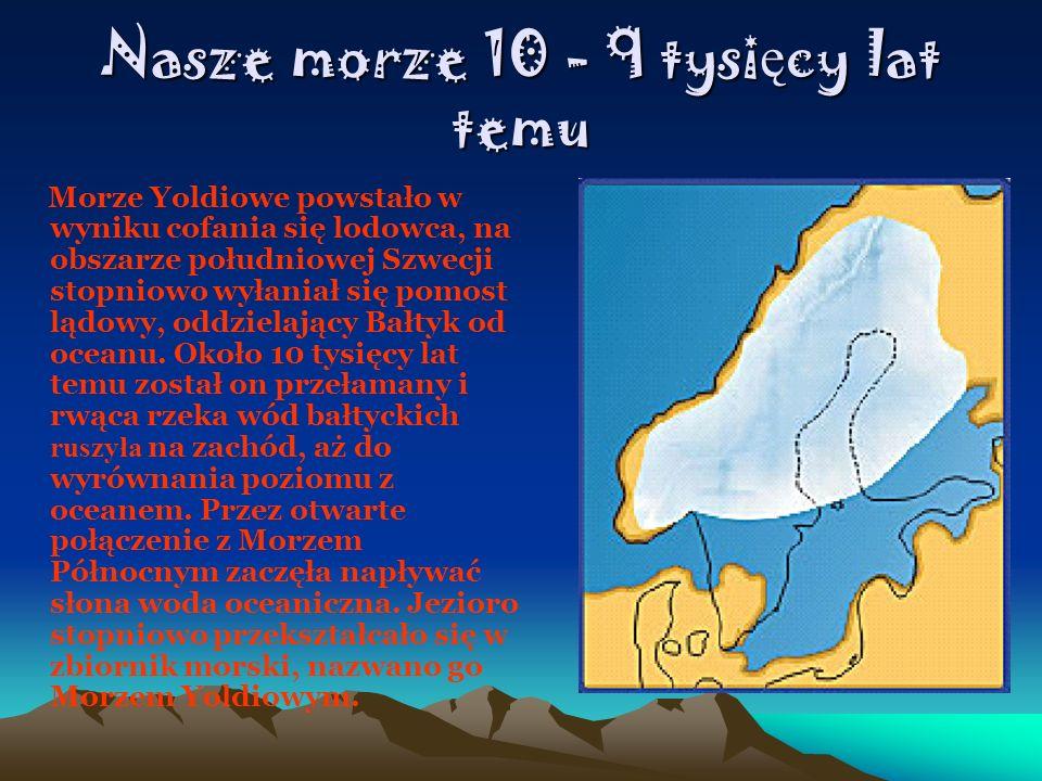 Nasze morze 10 - 9 tysi ę cy lat temu Morze Yoldiowe powstało w wyniku cofania się lodowca, na obszarze południowej Szwecji stopniowo wyłaniał się pom