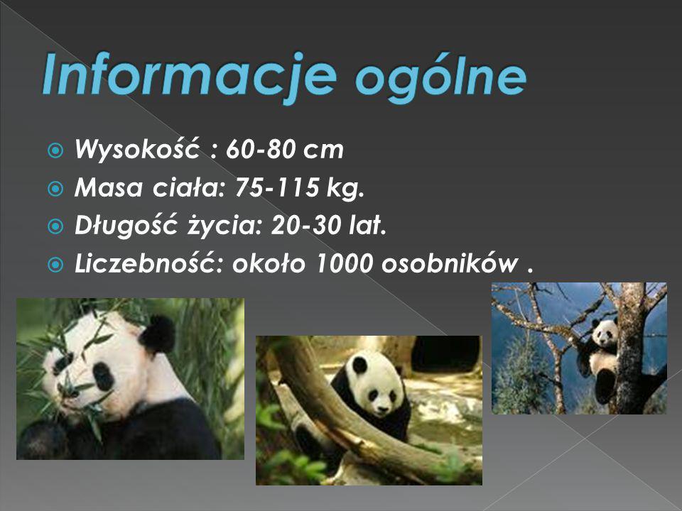 Wysokość : 60-80 cm Masa ciała: 75-115 kg. Długość życia: 20-30 lat. Liczebność: około 1000 osobników.