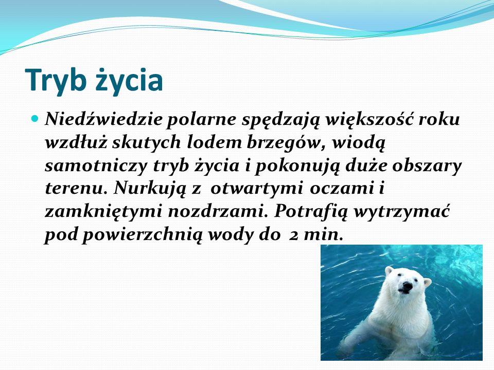 Tryb życia Niedźwiedzie polarne spędzają większość roku wzdłuż skutych lodem brzegów, wiodą samotniczy tryb życia i pokonują duże obszary terenu. Nurk