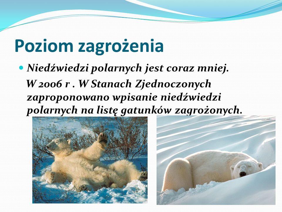 Poziom zagrożenia Niedźwiedzi polarnych jest coraz mniej. W 2006 r. W Stanach Zjednoczonych zaproponowano wpisanie niedźwiedzi polarnych na listę gatu