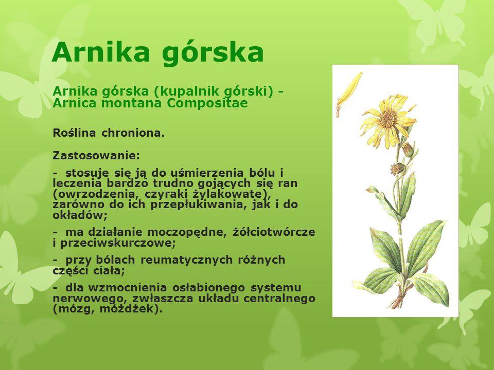 Rośliny lecznicze i ich zastosowanie Marysia Nowakowska Klasa IV D