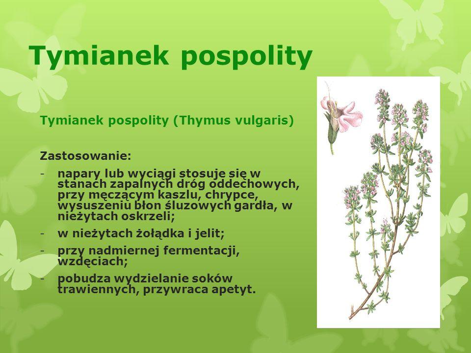 Szałwia lekarska Szałwia lekarska (Salvia ofticinalis) Zastosowanie: -napar szałwi stosuje się przy nadmiernym poceniu się nocnym; -dzięki bakteriobójczym właściwościom napar stosuje się zewnętrznie do płukania jamy ustnej, gardła, przy ropnym zapaleniu dziąseł, pleśniawce i przy anginie; -napar stosowany do okładów na trudno gojące się rany, owrzodzenia żylakowate nóg, a także jako dolewkę do kąpieli w chorobach reumatycznych, wysypkach i innych schorzeniach skórnych.