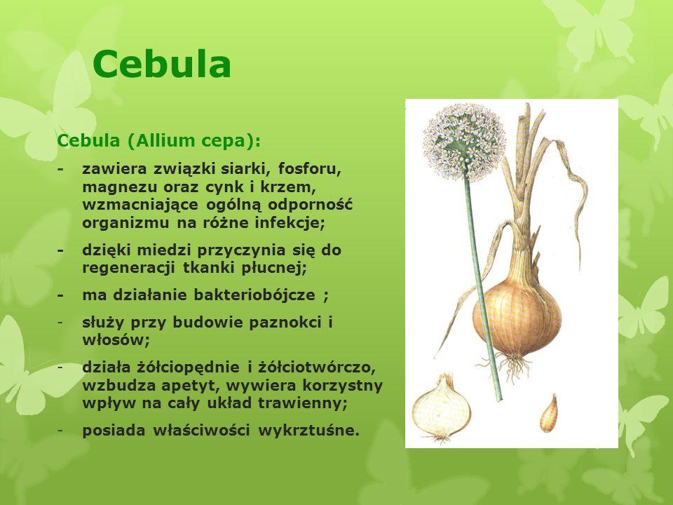Cebula Cebula (Allium cepa): -zawiera związki siarki, fosforu, magnezu oraz cynk i krzem, wzmacniające ogólną odporność organizmu na różne infekcje; -dzięki miedzi przyczynia się do regeneracji tkanki płucnej; -ma działanie bakteriobójcze ; -służy przy budowie paznokci i włosów; -działa żółciopędnie i żółciotwórczo, wzbudza apetyt, wywiera korzystny wpływ na cały układ trawienny; -posiada właściwości wykrztuśne.