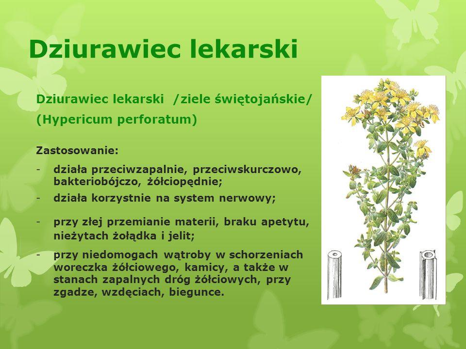 Czosnek pospolity Czosnek pospolity (Allium sativum) Zastosowanie: - ma właściwości bakteriobójcze; odkaża cały przewód pokarmowy i oddechowy - płuca, oskrzela i oskrzeliki, leczy katar, nieżyt nosa i przewlekły kaszel; -wybitnie obniża ciśnienie krwi, odmładza organizm, działa antymiażdżycowo; -oczyszcza organizm z różnych substancji trujących; -napar czosnku na mleku stosuje się przeciw owsikom i innym pasożytom przewodu pokarmowego.
