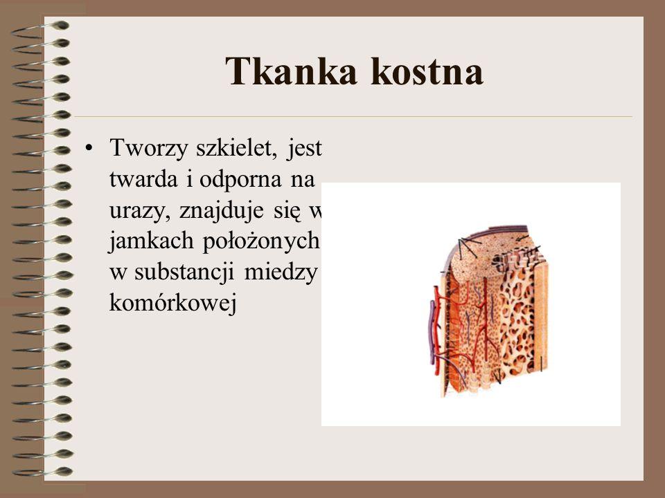 Tkanka kostna Tworzy szkielet, jest twarda i odporna na urazy, znajduje się w jamkach położonych w substancji miedzy komórkowej