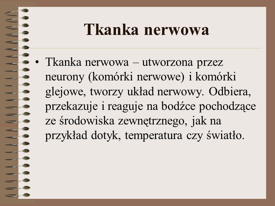 Tkanka nerwowa Tkanka nerwowa – utworzona przez neurony (komórki nerwowe) i komórki glejowe, tworzy układ nerwowy. Odbiera, przekazuje i reaguje na bo