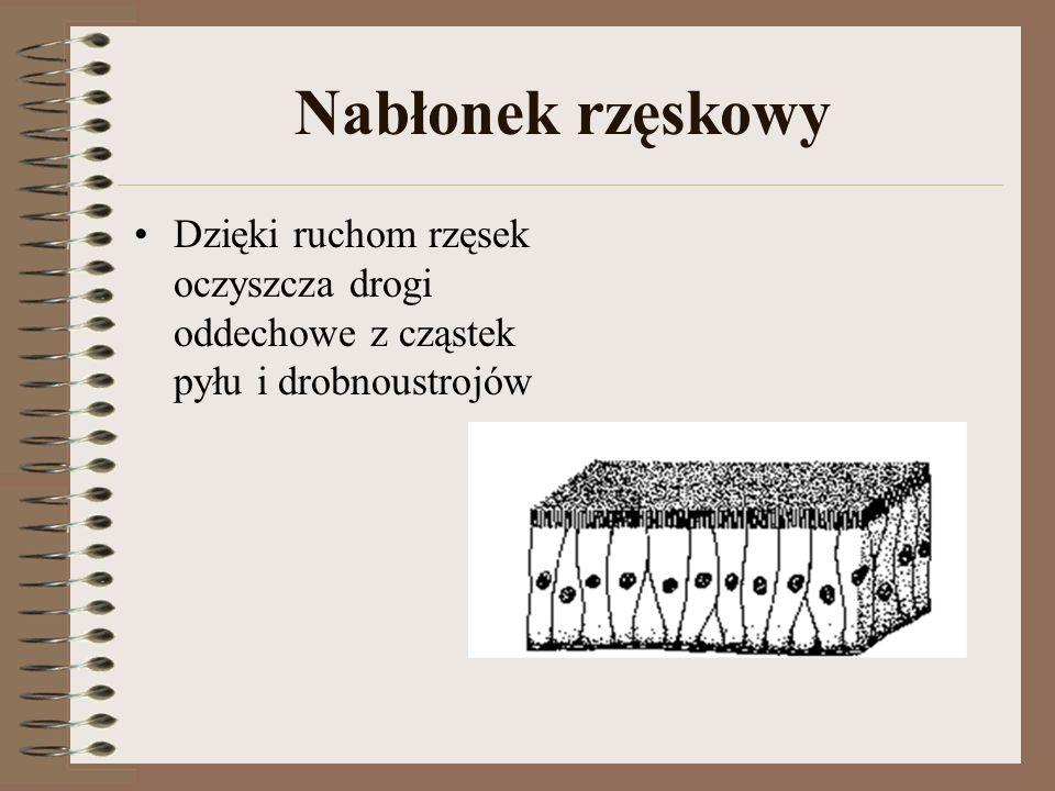 Tkanka nerwowa Tkanka nerwowa – utworzona przez neurony (komórki nerwowe) i komórki glejowe, tworzy układ nerwowy.