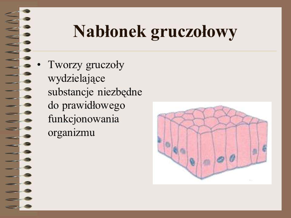 Nabłonek gruczołowy Tworzy gruczoły wydzielające substancje niezbędne do prawidłowego funkcjonowania organizmu