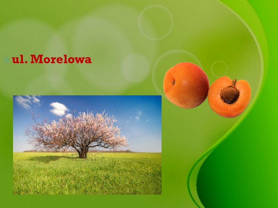 ul. Morelowa