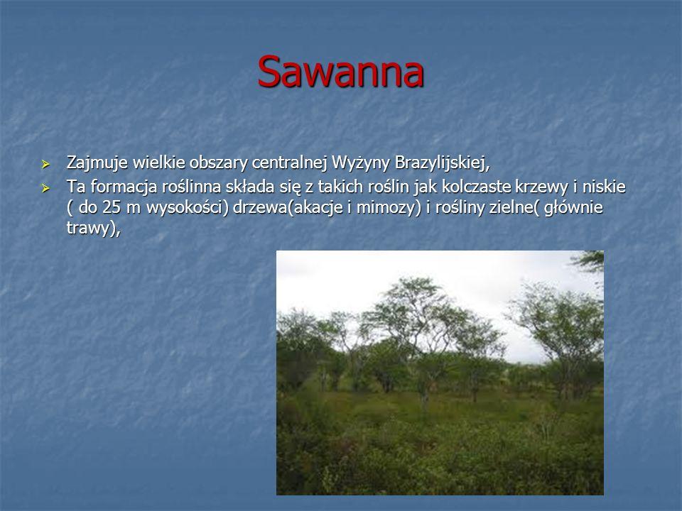 Sawanna Zajmuje wielkie obszary centralnej Wyżyny Brazylijskiej, Zajmuje wielkie obszary centralnej Wyżyny Brazylijskiej, Ta formacja roślinna składa