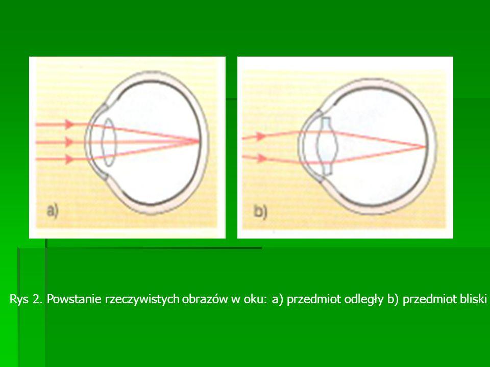 Przednia część oka załamuje promienie, które do niej docierają.