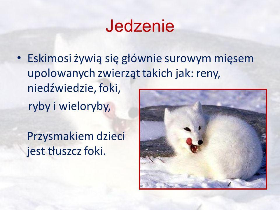 Eskimosi żywią się głównie surowym mięsem upolowanych zwierząt takich jak: reny, niedźwiedzie, foki, ryby i wieloryby, Przysmakiem dzieci jest tłuszcz