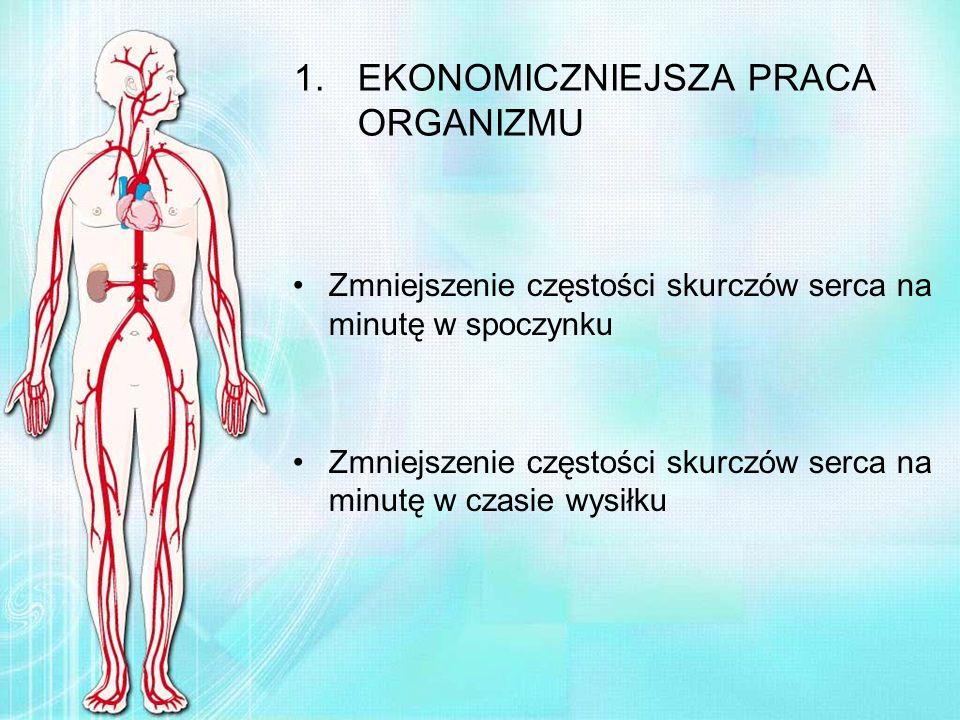 1.EKONOMICZNIEJSZA PRACA ORGANIZMU Zmniejszenie częstości skurczów serca na minutę w spoczynku Zmniejszenie częstości skurczów serca na minutę w czasi